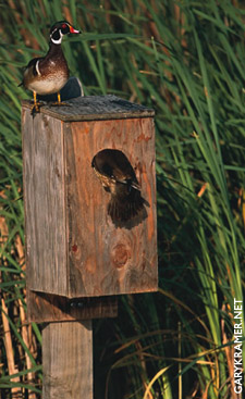 Kramer-WoodDuckBoxes